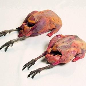 Fazant hen - Meattime